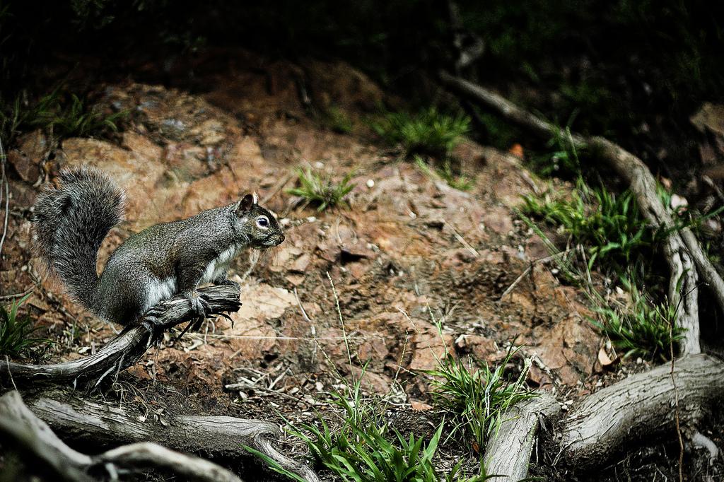 Nature – Squirrel