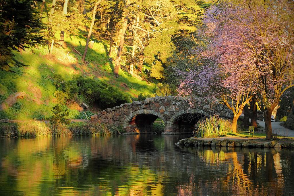 Nature – Bridge