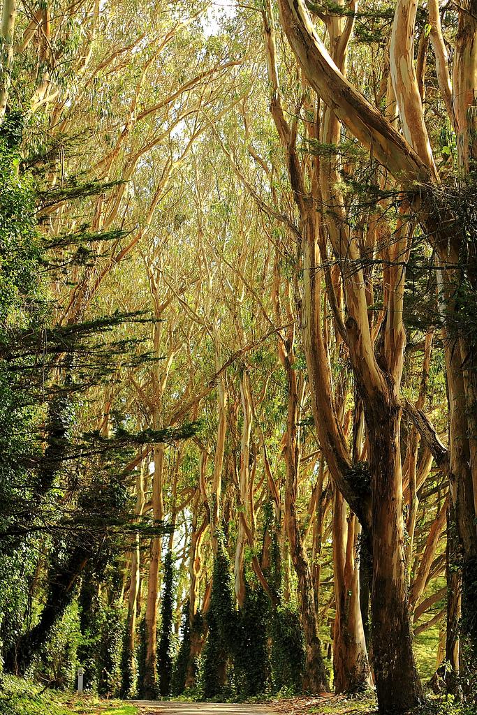 Nature – Trees