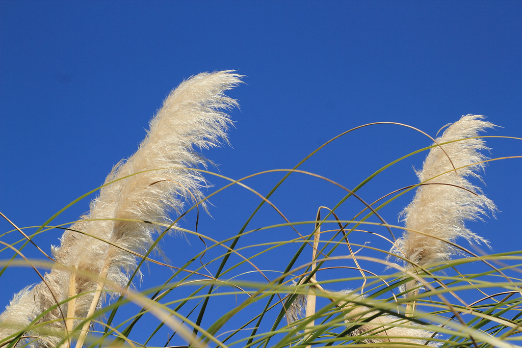 Nature – Feathers