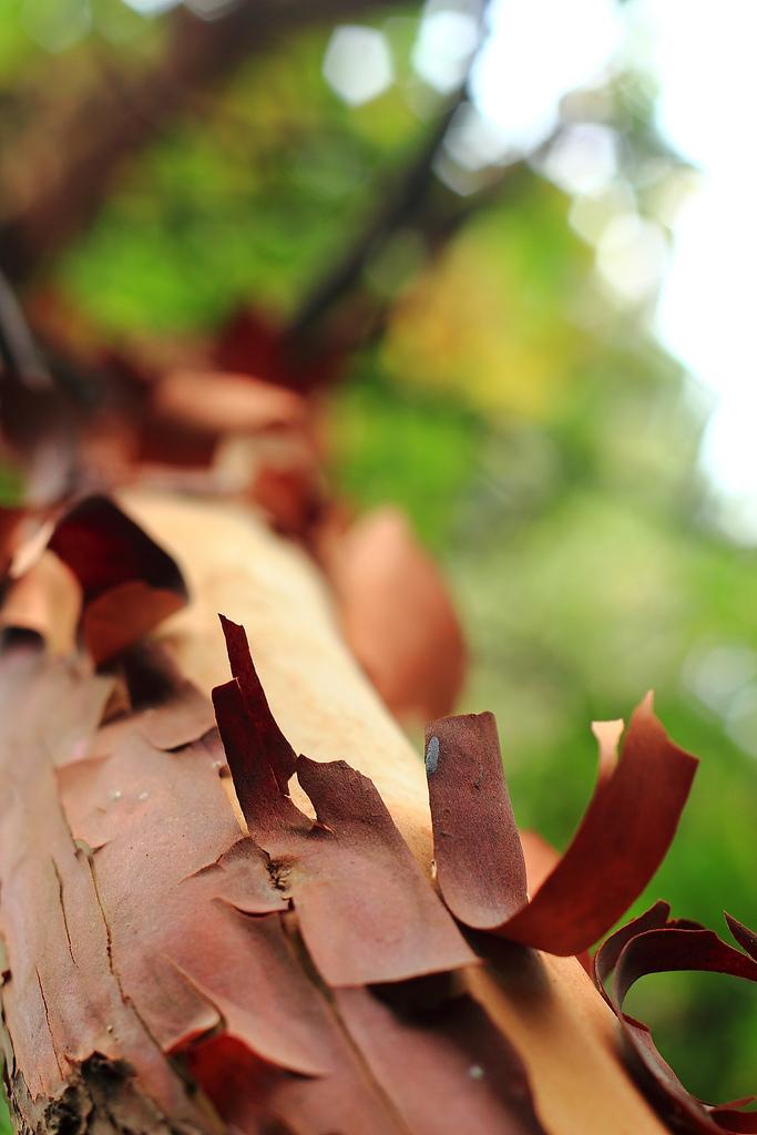 Nature – Bark